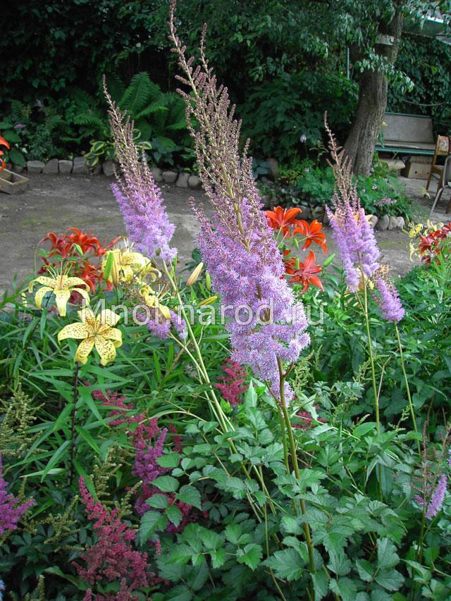 Популярные многолетние садовые цветы